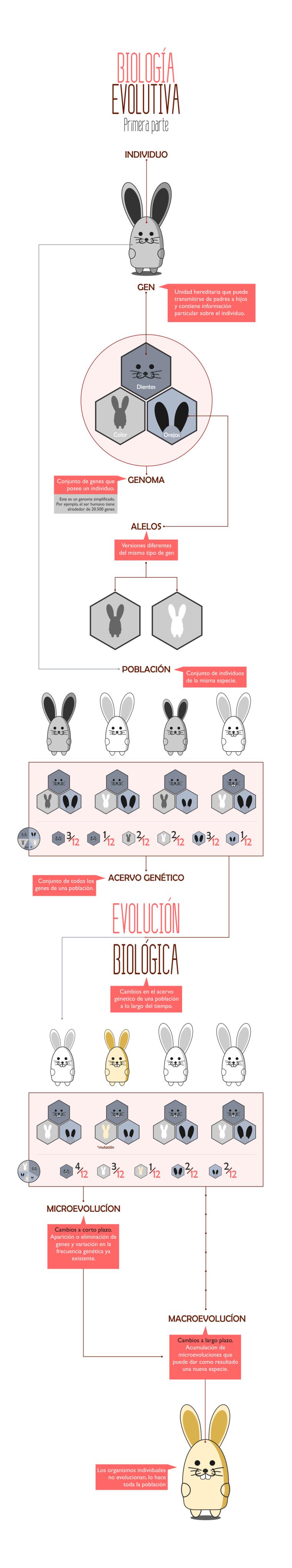 infografía_evolucion_biologica