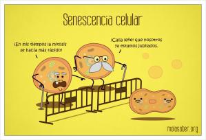 SenescenciaCelular